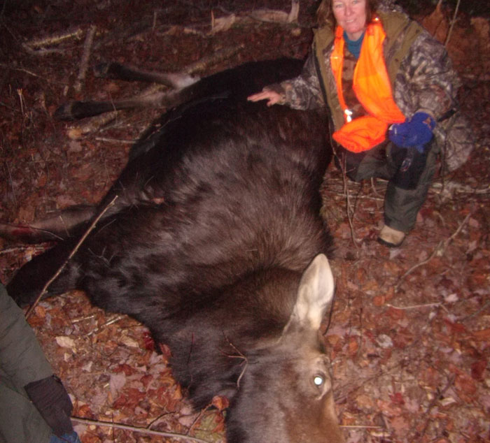 Ross Lake Camps Maine Cow Moose Hunt